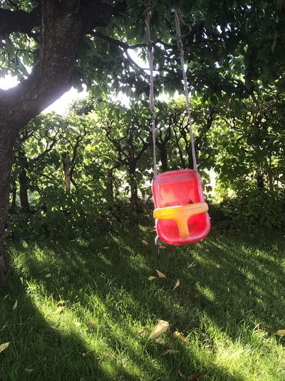 Tree Hanging Growth No People Outdoors Green Color Nature Sunlight Day Watering Can Plant Branch Grass Morning Light Morning Swing Red Red Swing Toy Outdoor Garden In The Garden