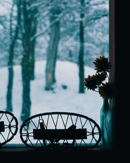 Silhouette of trees by window during winter