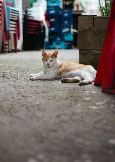 Portrait of cat resting