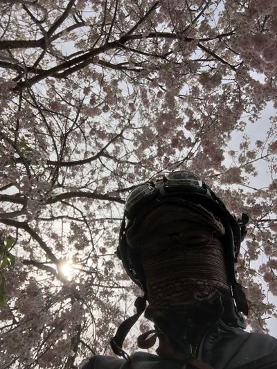 上から目線(σ´∀`)σ Open Air Coffee Blue Sky Moto Life Motorcycle Cherry Blossom Motorbike Tree Plant Nature Day Headshot Branch One Person Low Angle View Real People Portrait Beauty In Nature