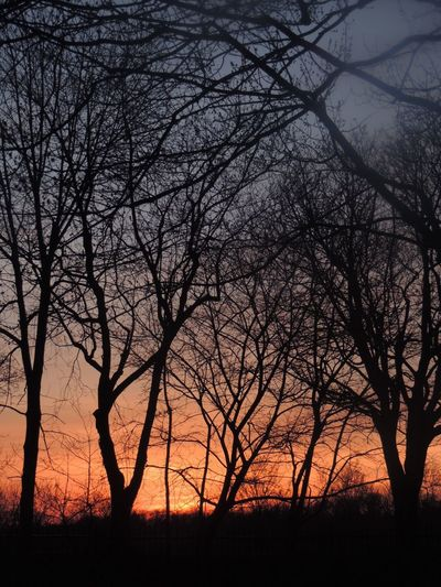 Sunset Beautiful Sunset Sunset And Trees Sunset Around The World Sunset_collection Sunset Silhouettes Enjoying The Sunset Beauty In Nature Bare Tree Tree Outdoors Scenics Branch Montreal, Canada