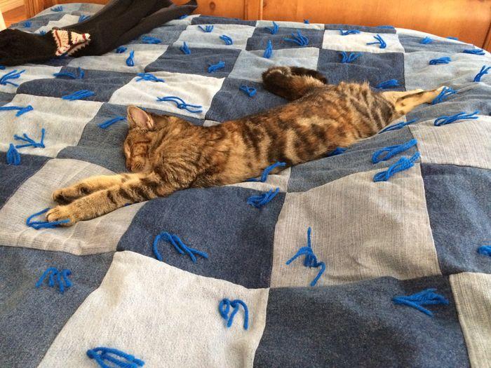 Bed Blue Cat