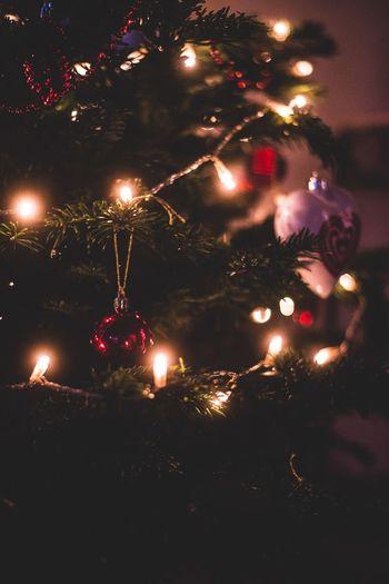 Christmas Celebration Tradition Christmas Tree Close-up Christmas Decoration Christmas Ornament Christmas Lights Indoors  Christmas Bauble