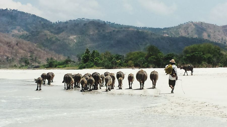 Full length rear view of herder herding cows at riverbank by mountains against sky