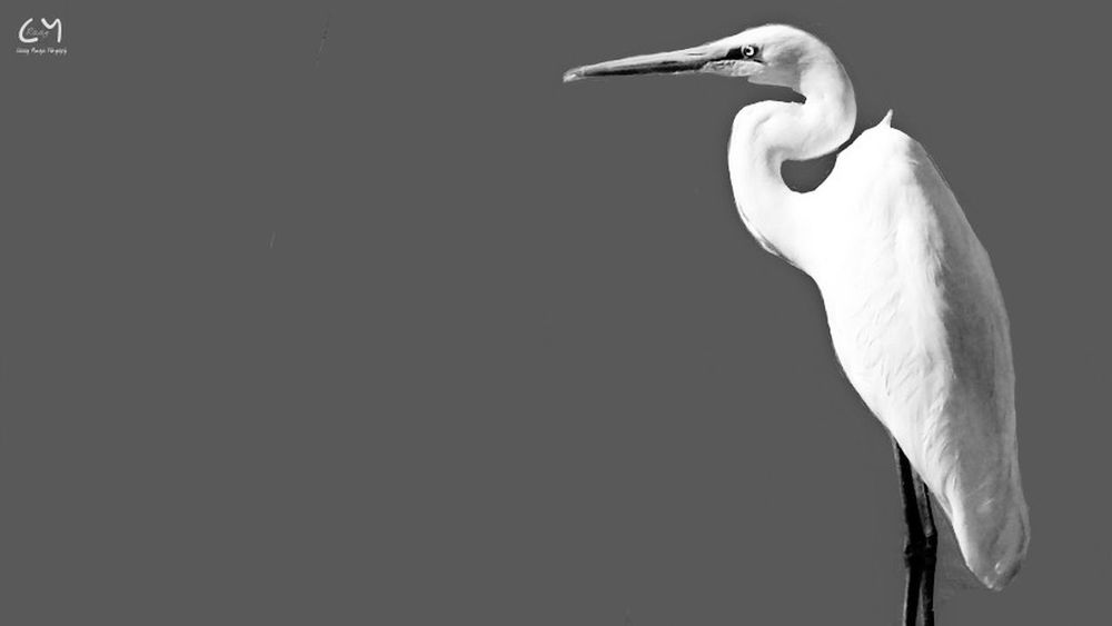 Bird Photography Stork Blackandwhite Photography Birdportraits Bestanimalpics Bestwallpaper Animal Themes Animals In The Wild One Animal Pet Portraits