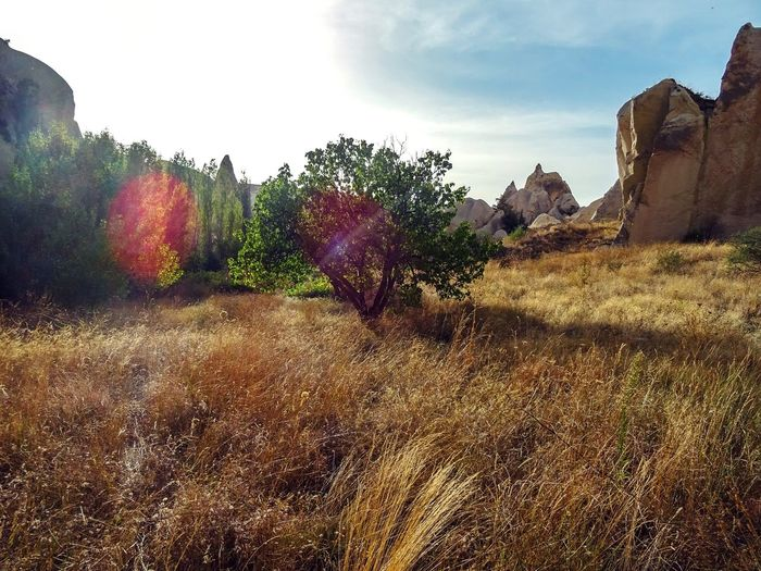 Nature Nature_collection Landscape Landscape_Collection Trees Capadoccia