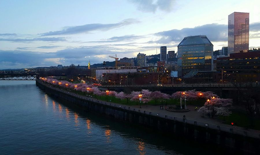 The cherry blossoms were impressive. Cherry Blossoms Tree_collection  Landscape_Collection Check This Out Portland Oregon Portland Willamette River  Sky_collection Clouds And Sky Riverside Cityscapes