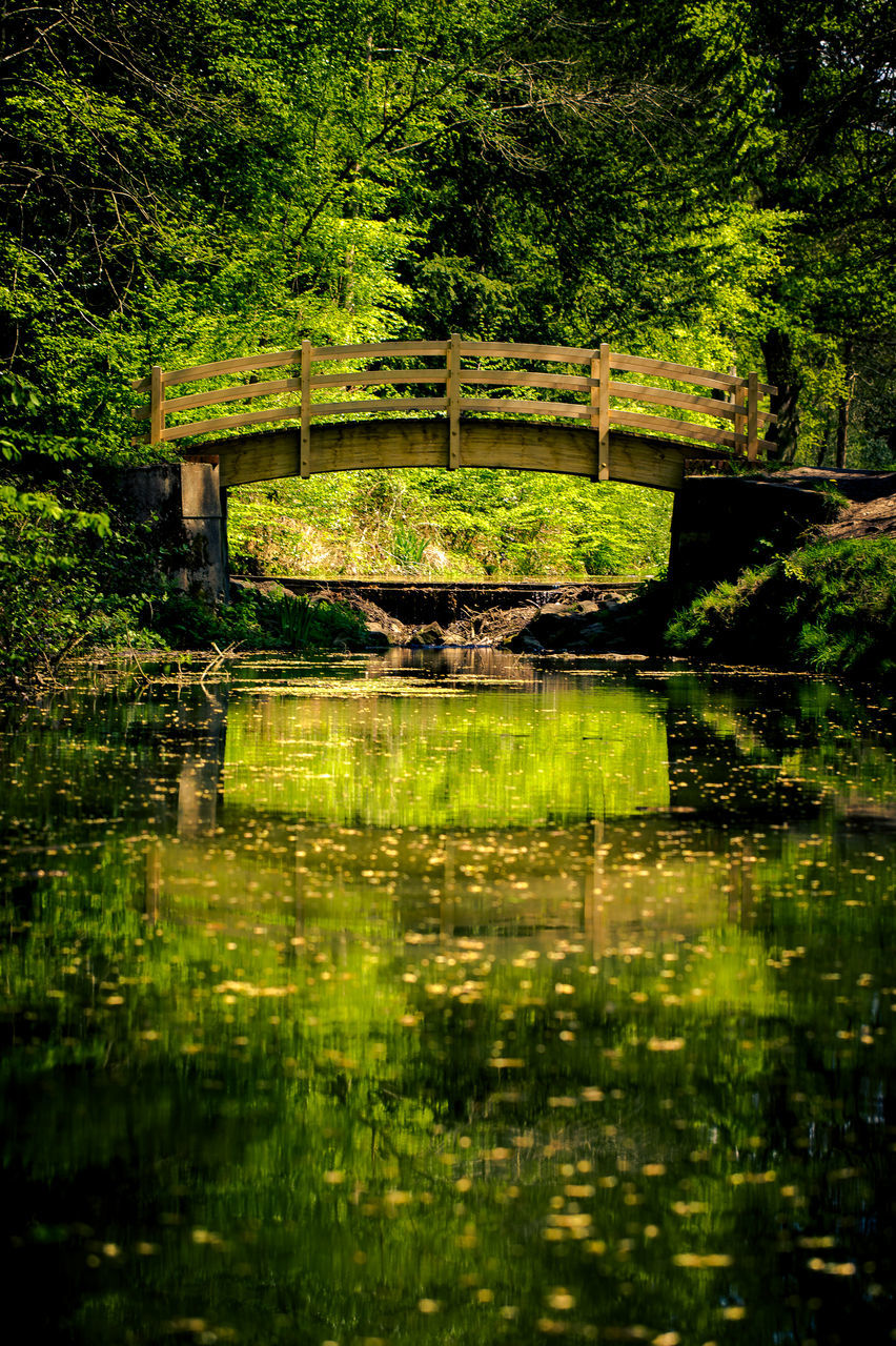 reflection, water, lake, nature, tree, forest, tranquil scene, waterfront, scenics, outdoors, tranquility, no people, beauty in nature, bridge - man made structure, day