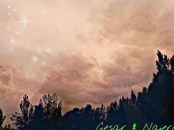 Nature Tree Pine Tree Pinaceae Treetop Beauty In Nature Sunset Sky EyeEm Gallery Vitoria-es Cesar & Najera Helloeyem Nature Pine Woodland No People Forest Silhouette Landscape Outdoors Space Milky Way Midnight