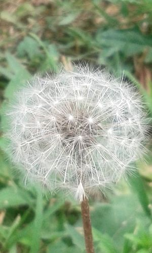Composite Flower Composite Flower Head Nature Nature_collection Nature Photography Natural Beauty Natural Beauty ♡ Flower Head Flower Springtime Uncultivated Softness In Bloom Blooming Pollen