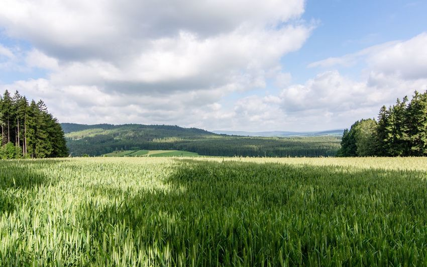 Point of view Marktredwitz Bavaria Bayern Landscape_photography Landscape_Collection Nikon D7100 Nikonphotography Nikon Landscape Field Nature Grass Tree Sky Tranquil Scene Beauty In Nature Scenics Cloud - Sky Agriculture Growth Green Color Mountain Meadow Rural Scene