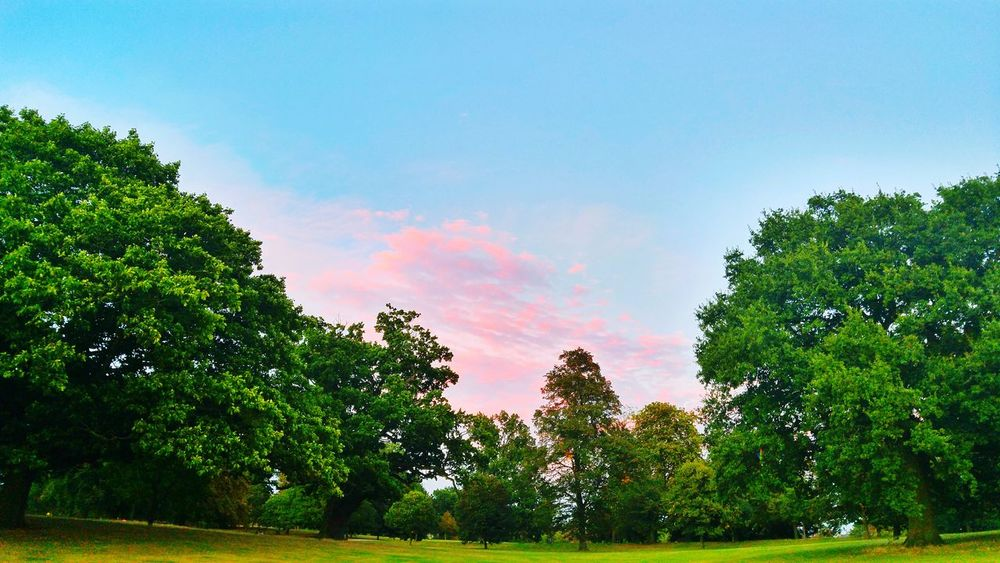Living in a game Sky Sunset Tree Nature Beauty In Nature No People Space Day Game Unnatural Vibrance Saturation Contrast Beautiful Amazing Loneliness Park Big Tree Cloud Pink Clouds