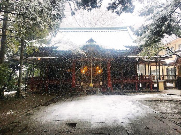 Akasaka 東京 Japan Exporingjapan Shrine Tokyo Built Structure Building Exterior Tree No People Outdoors Snow