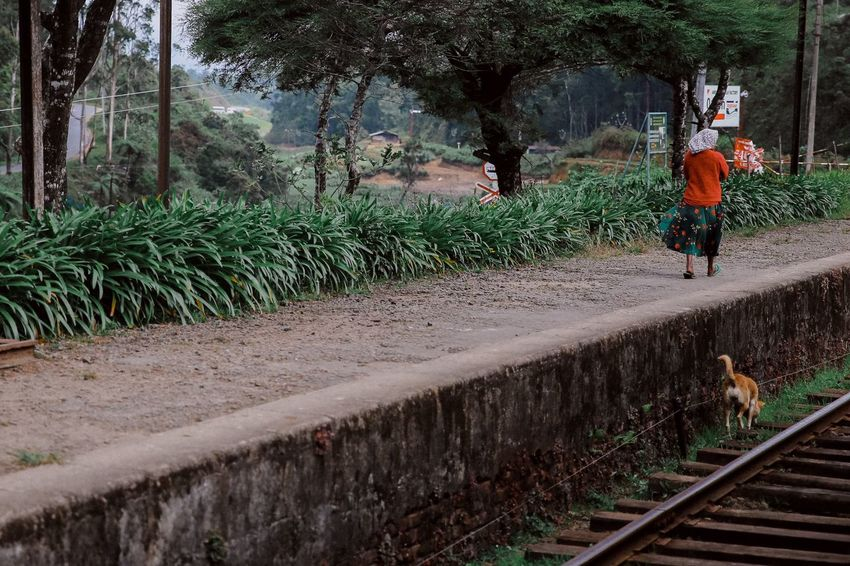 A woman and a dog Woman And Dog Walking Railroad Track Leaving Sri Lanka Pet Portraits Been There. An Eye For Travel This Is Family Focus On The Story The Traveler - 2018 EyeEm Awards The Street Photographer - 2018 EyeEm Awards