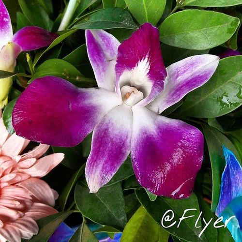 Orchid Flowers Plantbased Floweroftheday Picoftheday India Norway ASLO Nature Earth P Amazon Africa America
