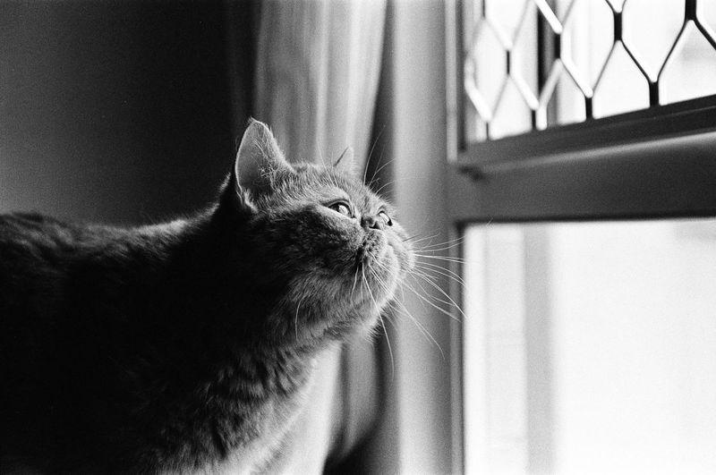 B/W Photography Cats Of EyeEm Cat Cat Lovers Film Photography Muji Sleepy Kitty