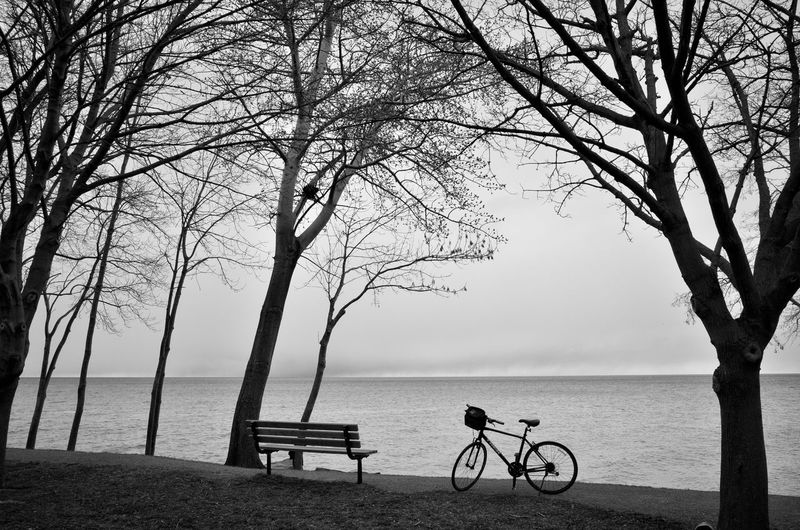 Bicycle by bare tree by sea against sky
