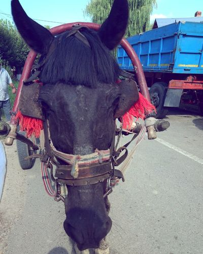 Domestic Animals Domestic Animal Themes Animal Mammal Transportation Working Animal Pets Day Animal Wildlife One Animal Livestock Street Horse Vertebrate Cart City Nature Outdoors Mode Of Transportation Rural Scene Old Horse