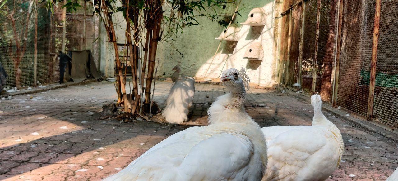 VIEW OF BIRD IN ZOO