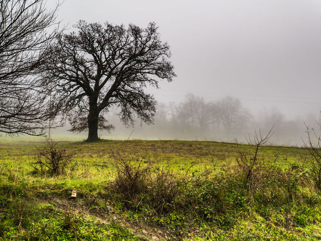 Tree Plant Landscape Field Land Grass Tranquility Environment Sky Non-urban Scene Isolated Solitude Scenics - Nature No People Foggy Morning Foggy Landscape