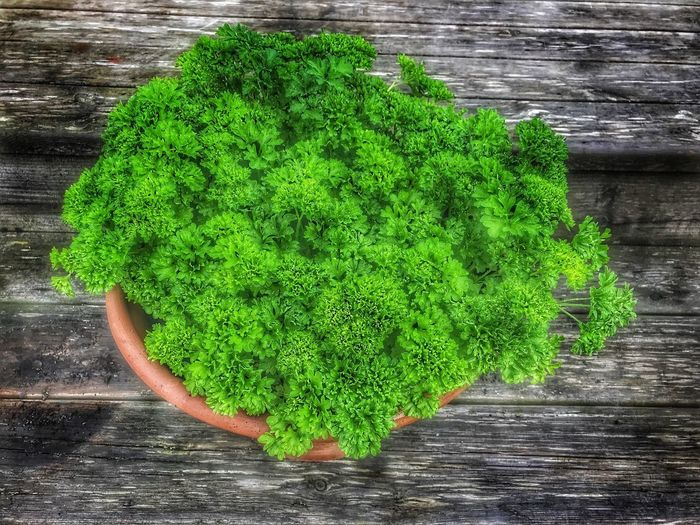 Parsley from my