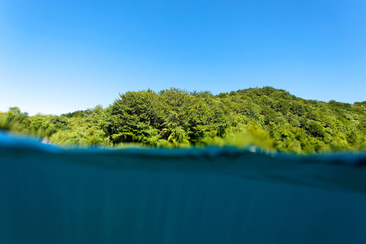 Surface level of trees against clear blue sky