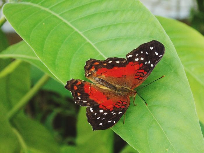 Close-up of butterfly on green leaf