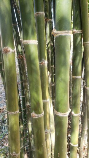 Full frame shot of bamboo cactus