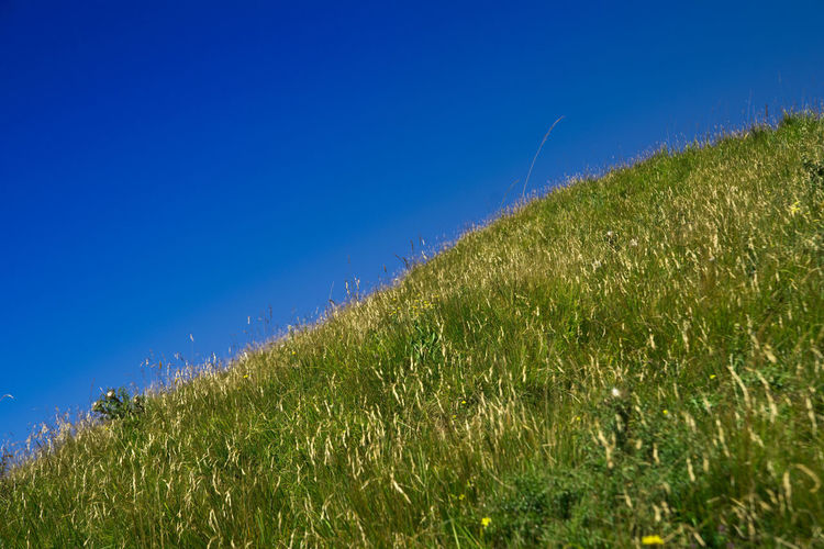 Plants growing on field against clear blue sky
