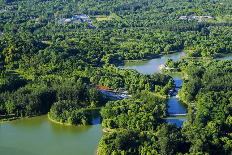 High angle view of trees and plants in river
