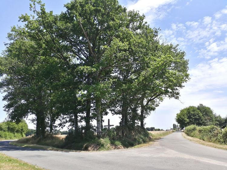 Tree Cloud - Sky Sky Day Outdoors Road Growth Tranquility Nature No People Landscape Scenics Beauty In Nature Crossing Cross Calvary Sunny Oak Summer Beautiful Nature Colours France Tree Beauty Simplistic Be. Ready.