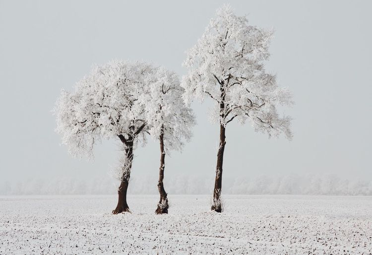 Winter Nature Tree Plant Land Beauty In Nature Growth Outdoors Day No People Winter
