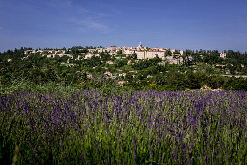 Sault, the undiscovered capital of lavender. Agriculture Architecture Beauty In Nature Building Building Exterior Built Structure Field Flower Flowering Plant Growth Land Landscape Lavender Lavender Colored Nature No People Outdoors Plant Purple Sky