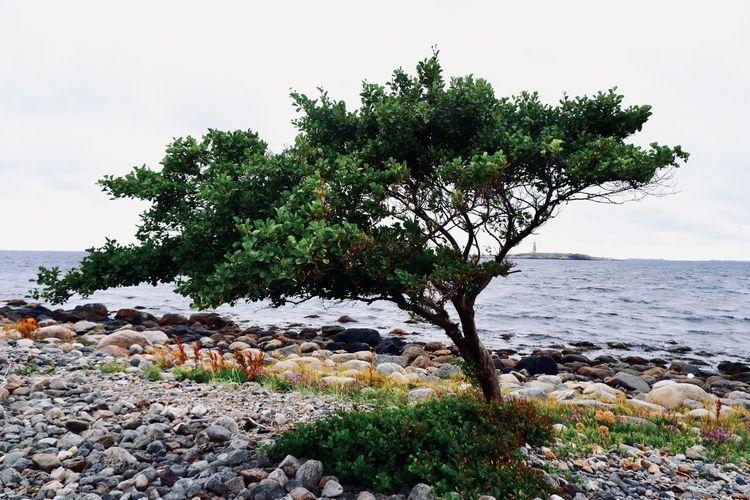 Trees growing on rocks by sea against sky