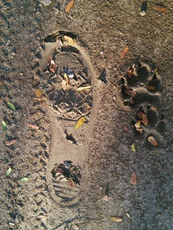Stepping into Autumn & Making Tracks! FootPrint Dog Footprint Tire Tracks Mud Muddy Muddy Road full frame No People Backgrounds Close-up Nature Adapted To The City Flying High