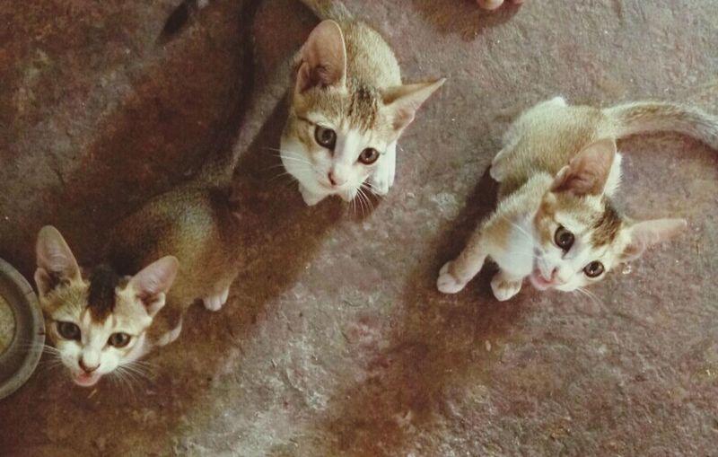 3 cuties... Eyeem Animal Best Shots Smartphone Photographer Animal Themes Animal Wildlife Mobile_photographer Animal Potrait Cats 🐱 Cats Of EyeEm Cute Cat 😻