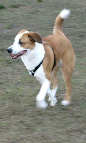 Doggy I Love My Dog Dog Welpe Training King Power Im The Boss Sweety  Star