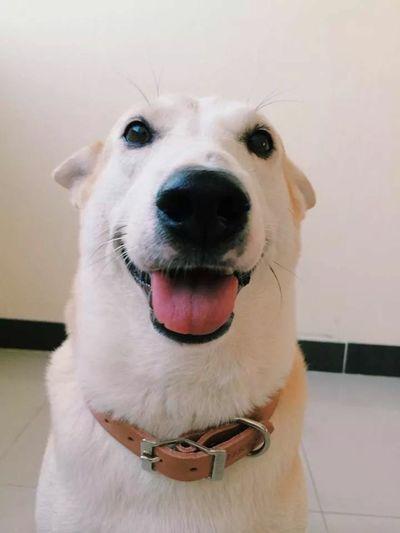 วอลเปเปอร์โทสับเค้า น้องกลูต้า หมาน่ายิ้ม น่าร๊ากกกก Fanpage @gluta Gluta Dog Dog❤ Dog Love Animal Love Animals Pet Smail Happy :)