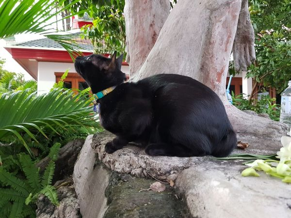 black cat Black Black Cat Pets Tree Black Color Architecture Kitten Puppy Young Animal