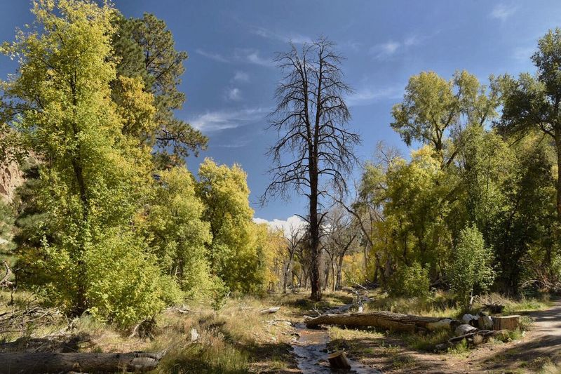 Bandalier National Monument Tree Tranquil Scene Golden Aspens Early Autumn Creekside Trail No People Beauty In Nature
