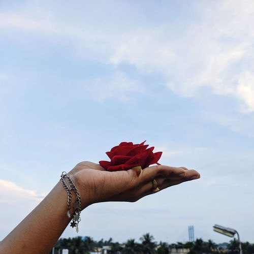 Close-up of hand holding red flowers against sky