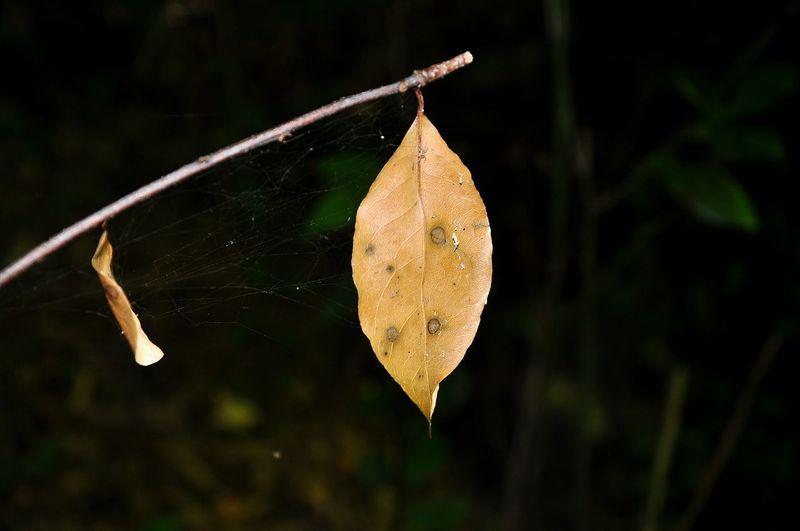 Water Tree Leaf