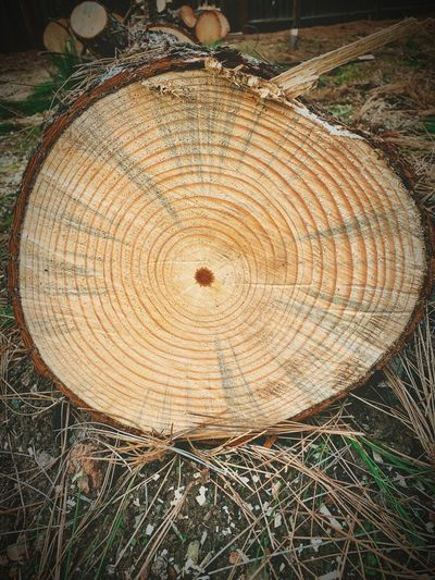 """From Birth To Death"" A massive pine tree is sadly taken down in a local open space due to a disease of some sort but it displays its beginnings to its end in the telling rings of the trunk. Tree Trunk Tree Rings Circle Bark Geometric Shape Tree Ring Tree Stump Tree Shape Nature Cross Section Timber Wood Log"