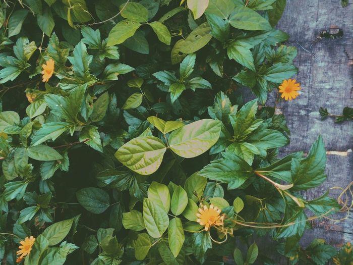Flowers Randomshot Followme Amateur Follow4follow Simple Photography Trying New Things Natural Simplicity Still Life Taking Photos Appreciating Nature