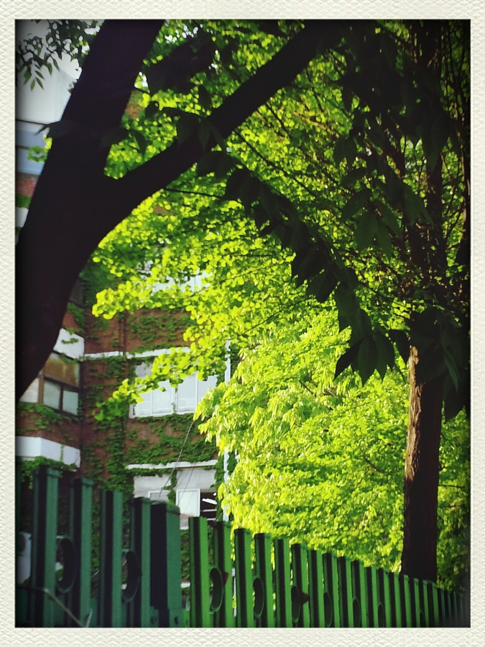 transfer print, tree, auto post production filter, growth, green color, branch, built structure, tree trunk, architecture, fence, low angle view, sunlight, day, nature, railing, no people, outdoors, building exterior, plant, shadow