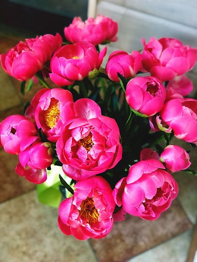 Pink 💖 Plant