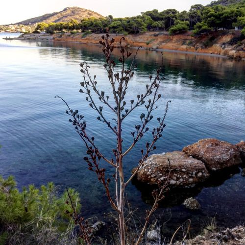 Water Tranquil Scene Tranquility Scenics Lake Plant Nature Beauty In Nature Growth Non-urban Scene Mountain Day Calm Physical Geography Geology Tourism Rock Formation Lakeside No People Shore Outdoors Greece salamina Salamina Flower