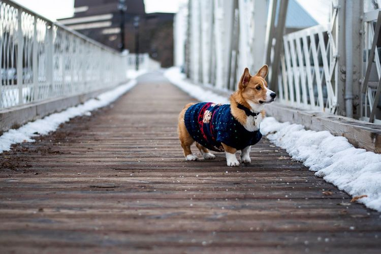 Dog wearing pet clothing while standing on footpath during winter