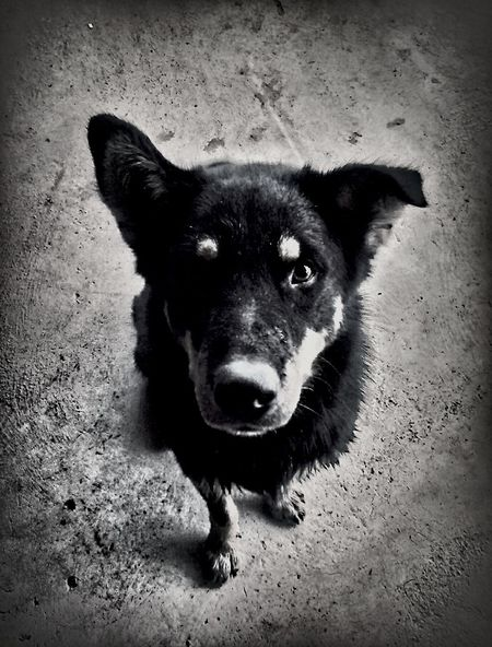 Playing With My Dog Selfiedog Taking Photos BlackDog