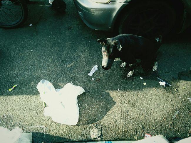 Bangkok Stray Dog Jjmarket